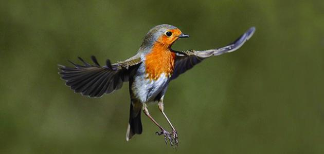 صورة ما هي اضعف حاسة عند الطيور , معلومات عن حواس الطيور