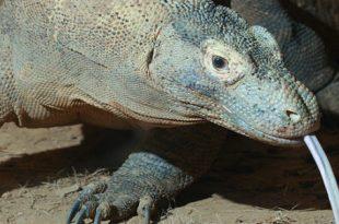 صور الحيوانات الزاحفة واسمائها , معلومات هامه عن الحيوانات الزاحفه