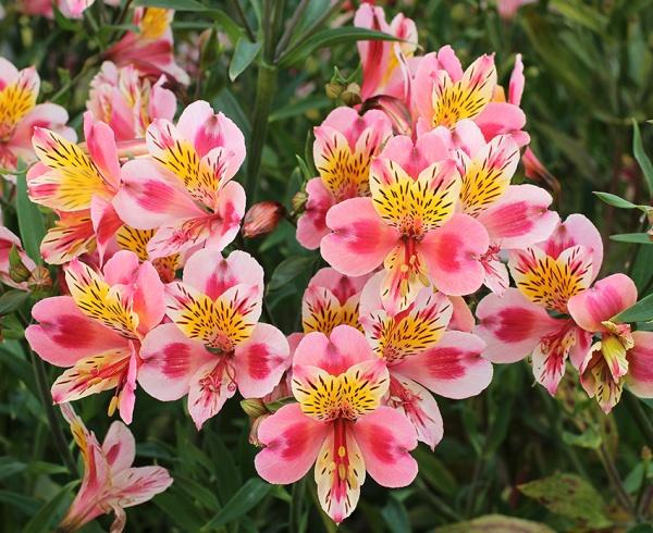 اسماء الورود النادرة تعرف علي اهم المعلومات عن الازهار عجيب وغريب