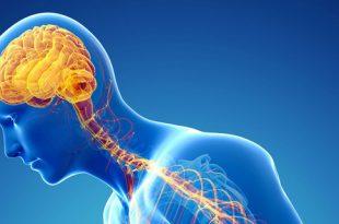 صور علاج الجهاز العصبي بالاعشاب , وصفات طبيعيه لعلاج الجهاز العصبي