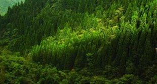 صورة اكبر غابات العالم , معلومات عن الغابات الشماليه