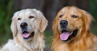 الكلاب في المنام للعزاء , الخوف من رؤيه الكلاب