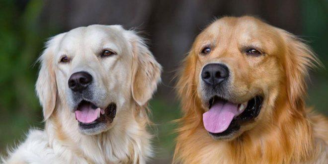 صور الكلاب في المنام للعزاء , الخوف من رؤيه الكلاب
