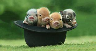 صورة صور حيوانات غريبة , عالم الحيوان في العالم