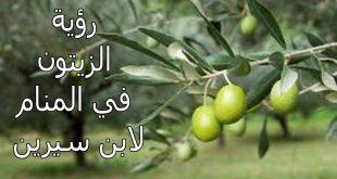 صور تفسير شجرة الزيتون في المنام , رؤية شجره الزيتون