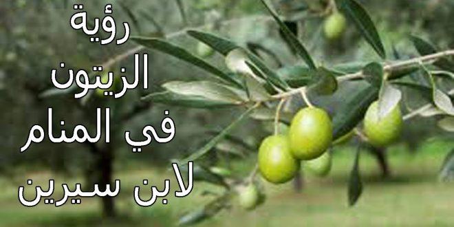 صورة تفسير شجرة الزيتون في المنام , رؤية شجره الزيتون
