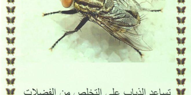 صور ما فائدة الذباب , اكره الصيف بسبب الذباب