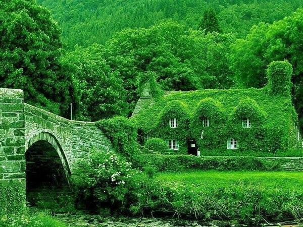 صورة تفسير حلم الارض الواسعة الخضراء , الخضره والمنظر الجميل في الاحلام