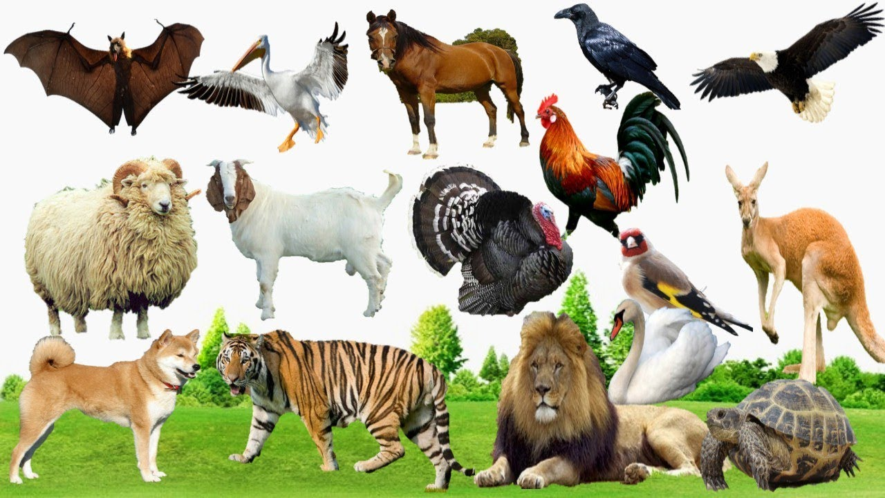 صورة اشرطة عن الحيوانات , معلومات هامة عن الحيوانات