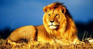 صور اشرطة عن الحيوانات , معلومات هامة عن الحيوانات