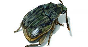 صور القضاء على سوس الخشب , من اخطر الحشرات