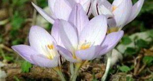 صور اسماء زهور الربيع , الهواء النقي الذي يشفي القلب
