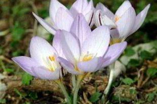 صورة اسماء زهور الربيع , الهواء النقي الذي يشفي القلب