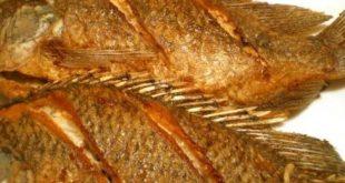 فوائد السمك المقلي , تعرف على فوائد السمك