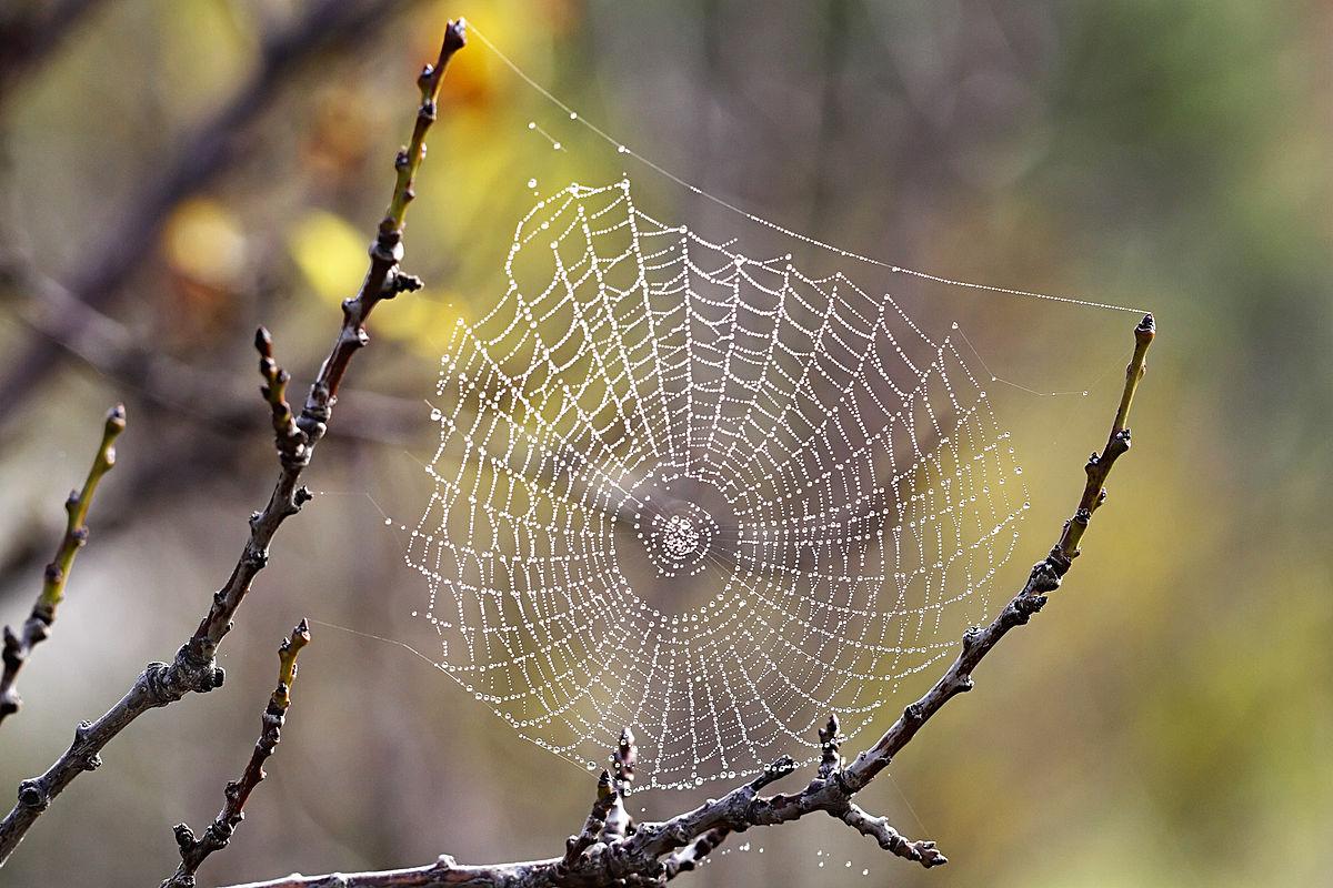 صورة رؤية العنكبوت في المنام لابن سيرين , حلمت بعنكبوت اسود