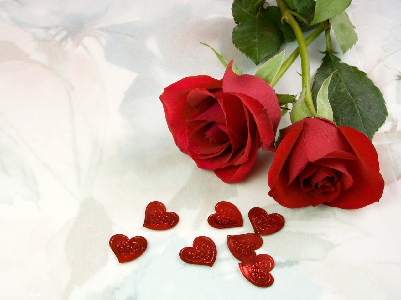 ورد جوري احمر رومانسي ارق وردة و اجمل عطر عجيب وغريب