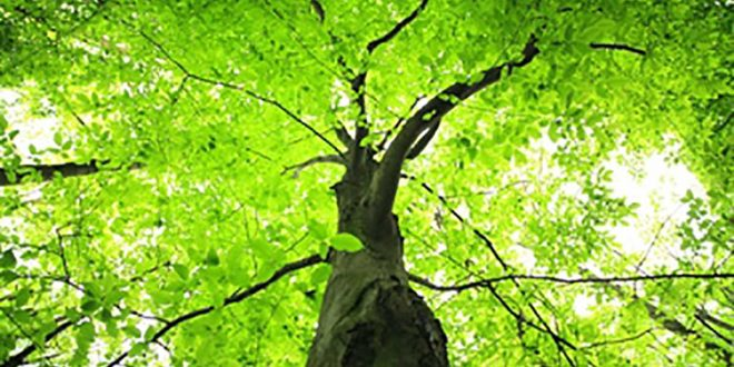 صورة تفسير حلم الشجرة , وقعت من فوق شجرة فى الحلم