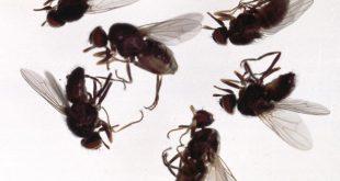 صورة للقضاء على الذباب , هذه الطريقة ستجعل الذباب يرحل
