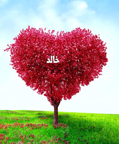 صورة صور لاسم خالد , احلى تصاميم لاسم خالد