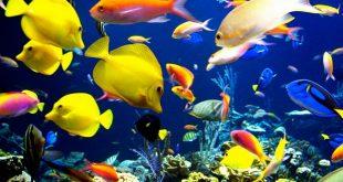 صورة التنفس عند الاسماك , موت الاسماك عند خروجها من الماء