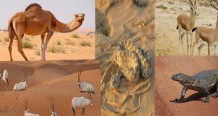 صورة الحيوانات التي تعيش في الصحراء , حيوانا تتحمل العطش
