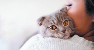 تفسير رؤية القط , القط حارس ودلالات اخري