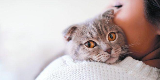 صورة تفسير رؤية القط , القط حارس ودلالات اخري