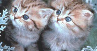 صورة صور حيوانات طريفة , شاهد اغرب صور الحيوانات