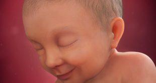 الاسبوع 37 من الحمل , تطور نمو الجنين فى نهاية الحمل