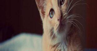 قتلت قطة في المنام , تفسير رؤيه دبح القطط