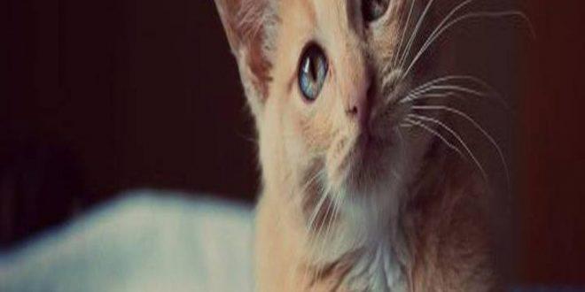 صورة قتلت قطة في المنام , تفسير رؤيه دبح القطط