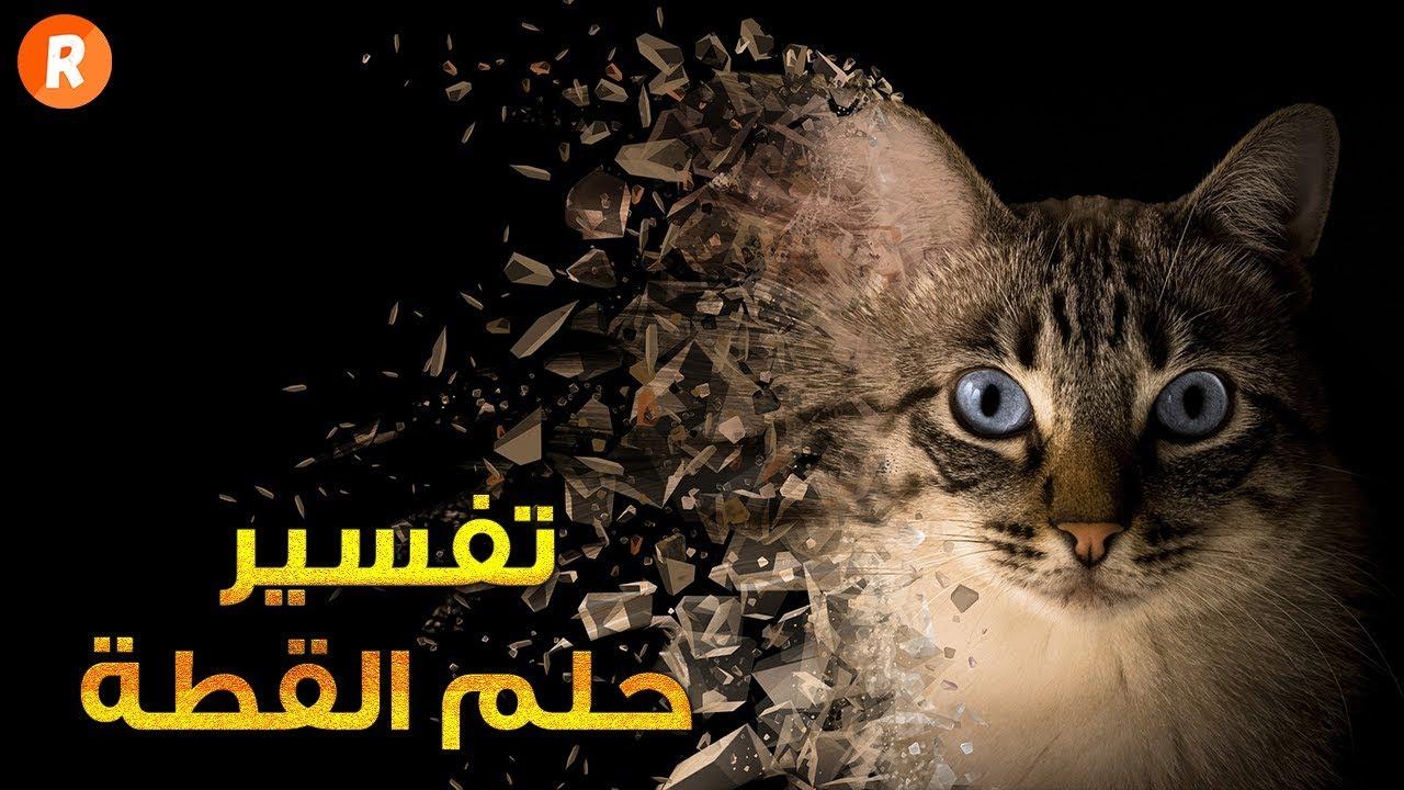 صورة الثعبان و القط في المنام , حلمت بقطه وتعبان 1642