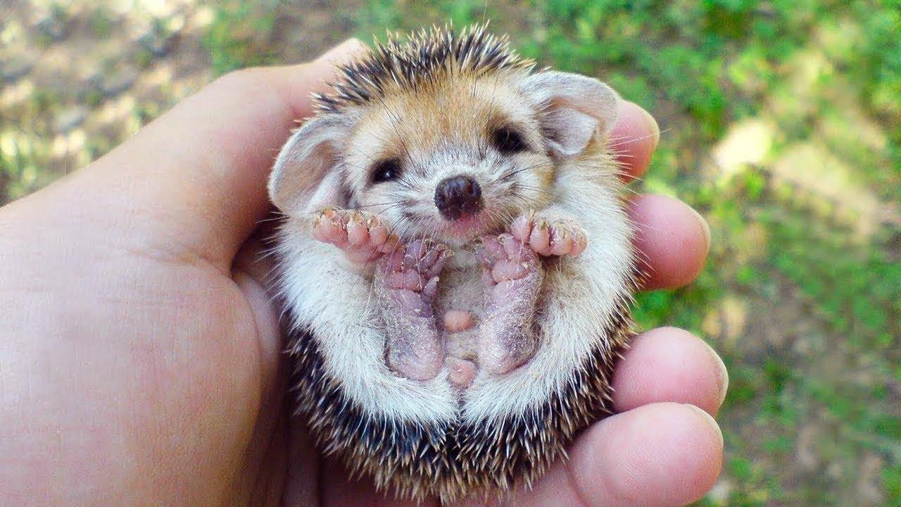 صورة صور حيوانات اليفة جميلة , ستفكر في تربية الحيوانات الاليفة من الان 652 2