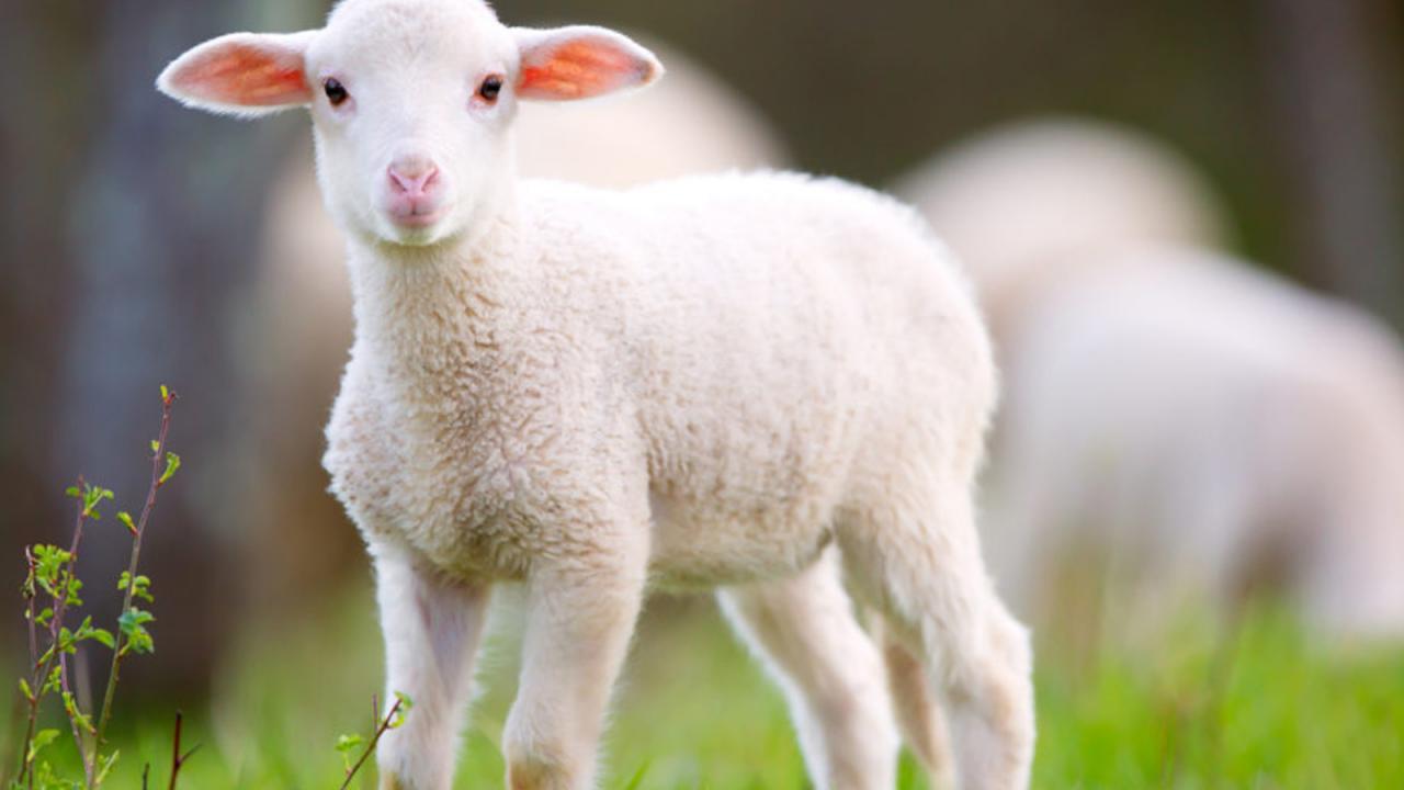 صورة صور حيوانات اليفة جميلة , ستفكر في تربية الحيوانات الاليفة من الان 652 5