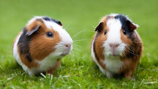 صورة صور حيوانات اليفة جميلة , ستفكر في تربية الحيوانات الاليفة من الان 652 6