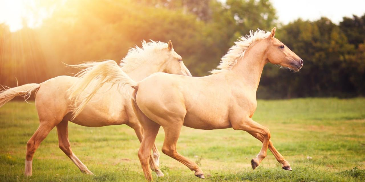 صورة صور حيوانات اليفة جميلة , ستفكر في تربية الحيوانات الاليفة من الان 652 7