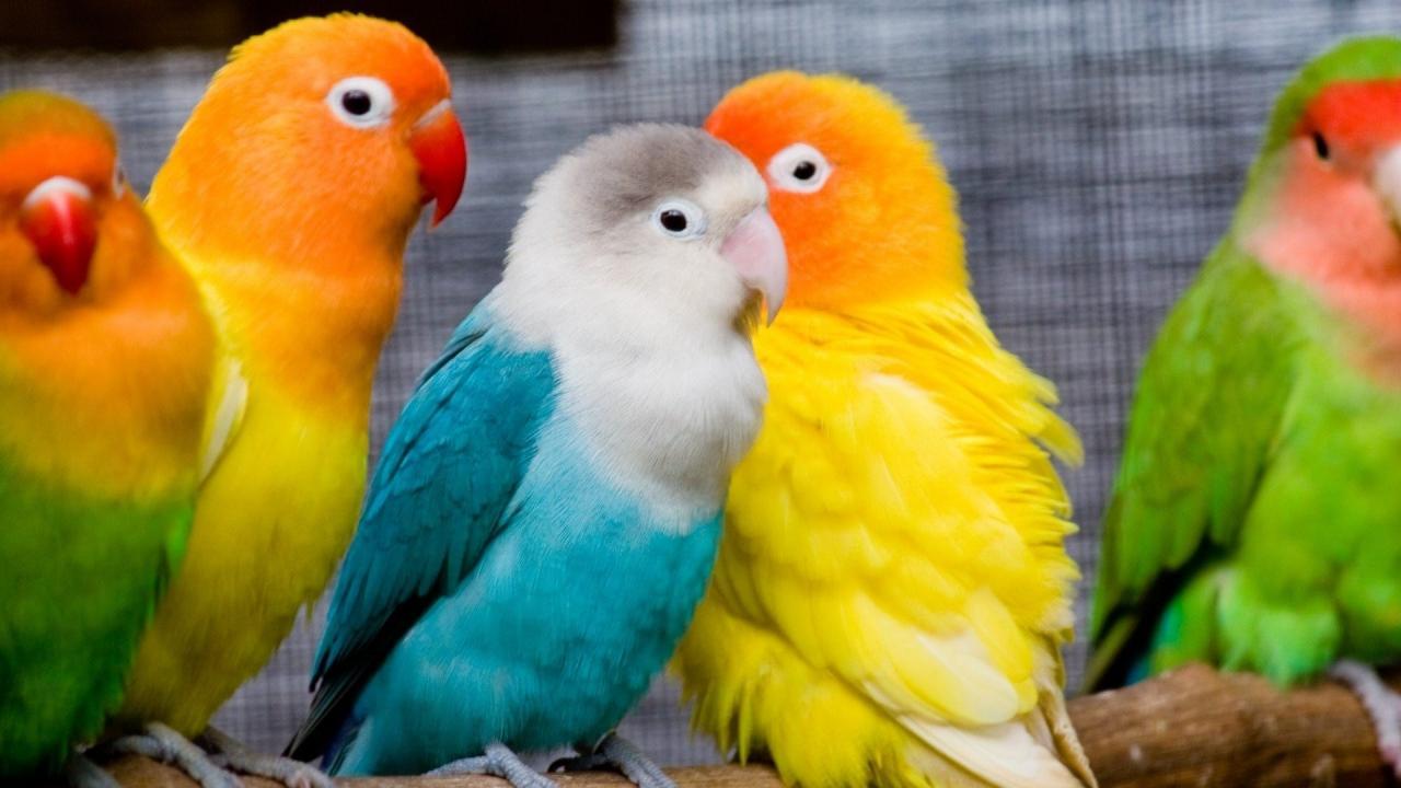 صورة صور حيوانات اليفة جميلة , ستفكر في تربية الحيوانات الاليفة من الان 652 8