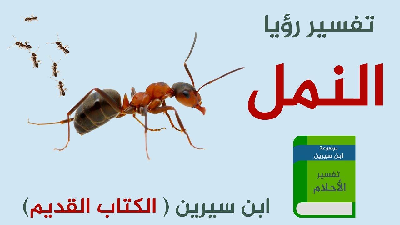 صورة تفسير حلم اكل النمل , شاهد بالتفصيل النمل في المنام