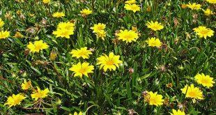 علاج احتباس السوائل في الجسم بالاعشاب , تخلص من سوائل الجسم بكل سهوله