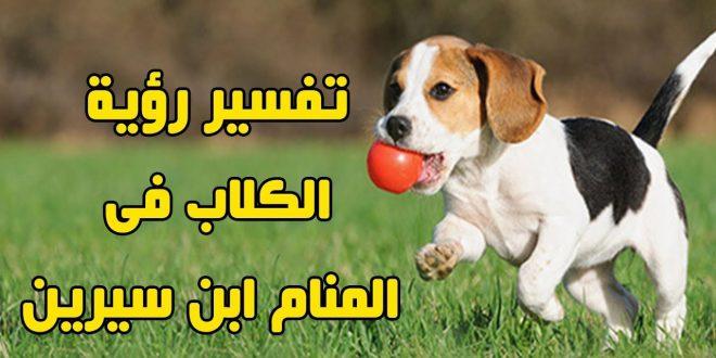 صورة رؤية الكلب في المنام لابن سيرين , كلب اسود في حلمي