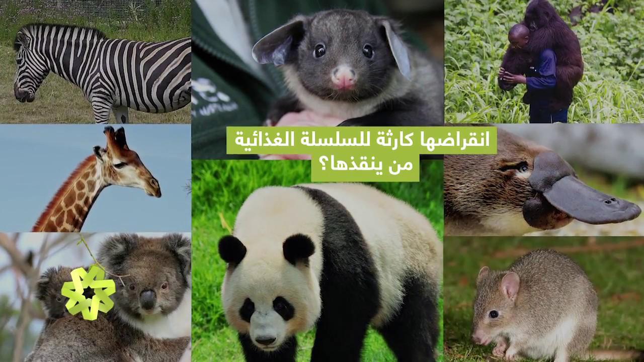 صورة حيوانات مهدده بالانقراض , هل تعلم انك سبب انقراض الحيوان 833 1