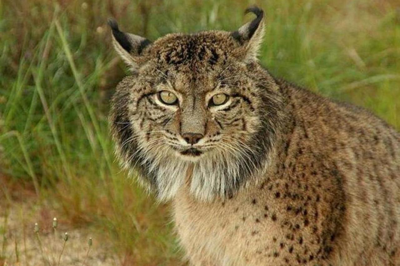 صورة حيوانات مهدده بالانقراض , هل تعلم انك سبب انقراض الحيوان 833 2