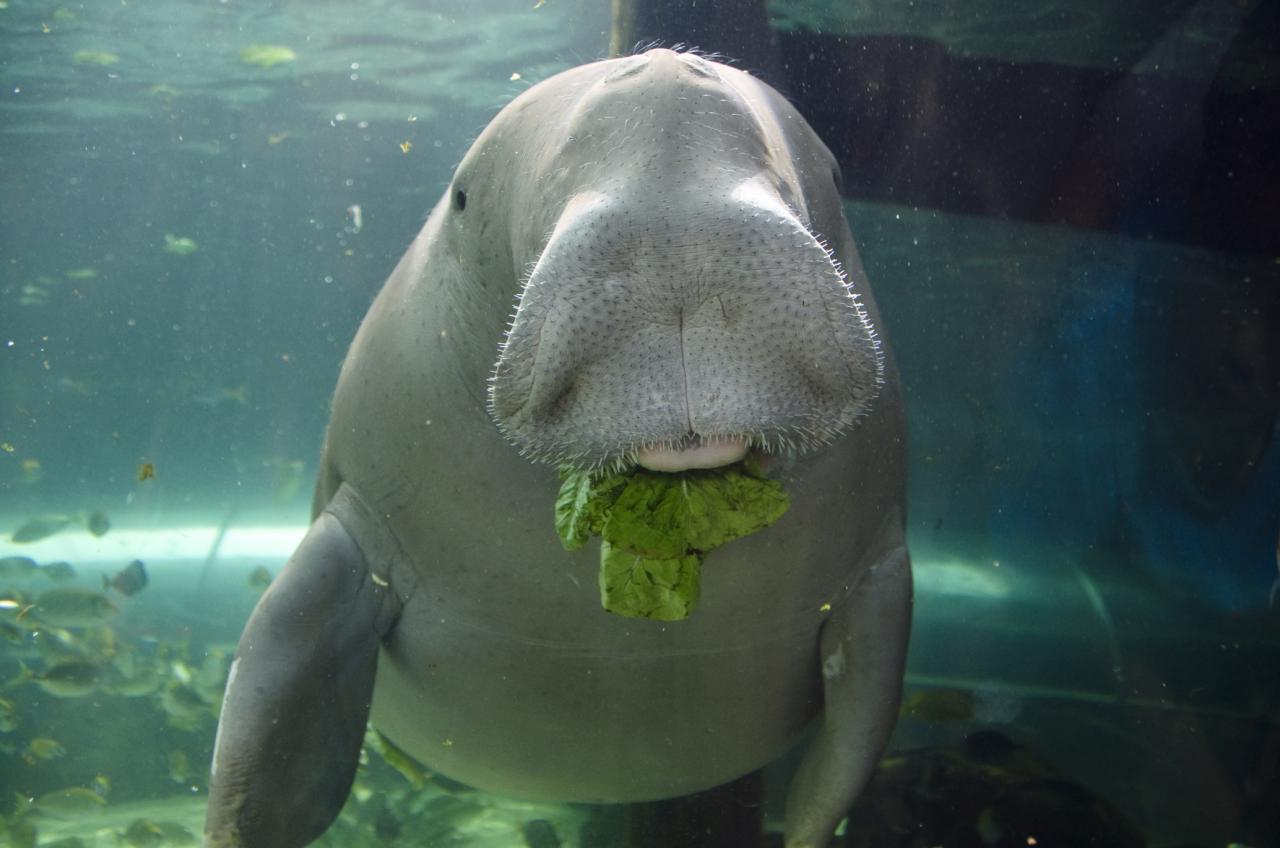 صورة حيوانات مهدده بالانقراض , هل تعلم انك سبب انقراض الحيوان 833 3