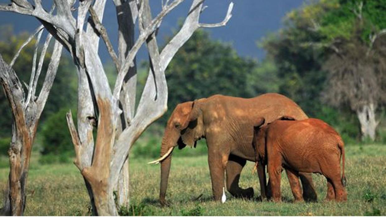 صورة حيوانات مهدده بالانقراض , هل تعلم انك سبب انقراض الحيوان 833 4
