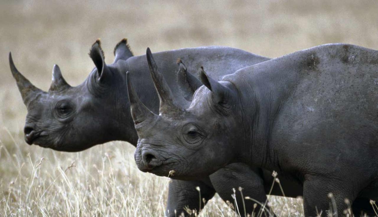 صورة حيوانات مهدده بالانقراض , هل تعلم انك سبب انقراض الحيوان 833 5
