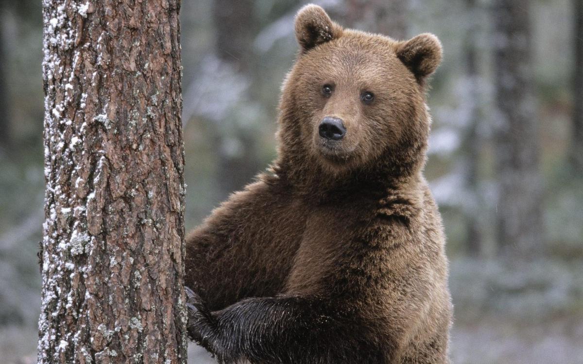 صورة حيوانات مهدده بالانقراض , هل تعلم انك سبب انقراض الحيوان 833 6
