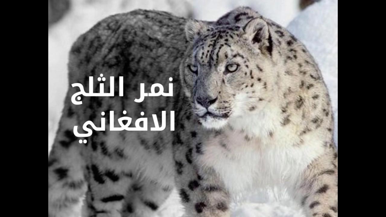 صورة حيوانات مهدده بالانقراض , هل تعلم انك سبب انقراض الحيوان 833 7