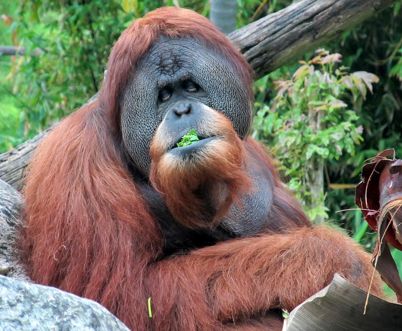 صورة حيوانات مهدده بالانقراض , هل تعلم انك سبب انقراض الحيوان 833 8