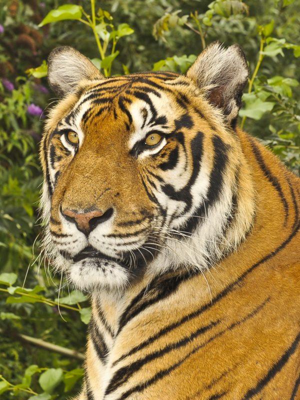 صورة حيوانات مهدده بالانقراض , هل تعلم انك سبب انقراض الحيوان