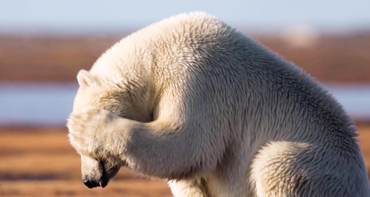 صورة حيوانات مهدده بالانقراض , هل تعلم انك سبب انقراض الحيوان 833